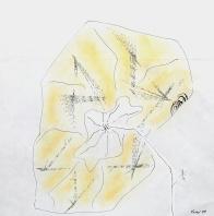 Eleaginus angustifolia